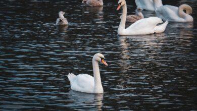 """بحيرة ألستر """"قلب هامبورغ النابض"""""""